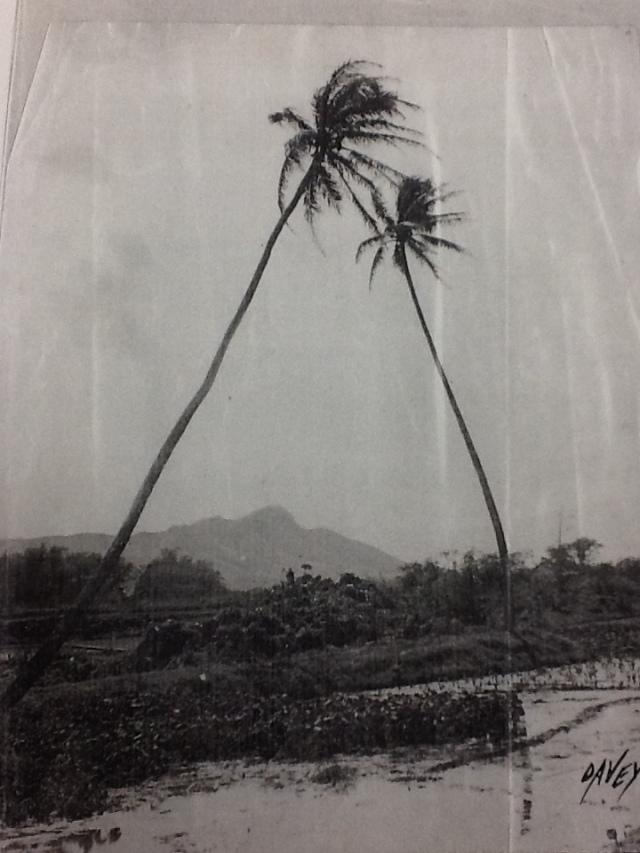 Ala Wai (1)